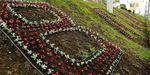 Имя Владивостока напишут цветами в районе Молодежной